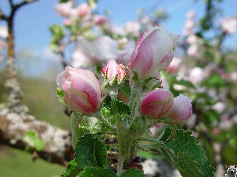 Fleurs de nos champs 0056