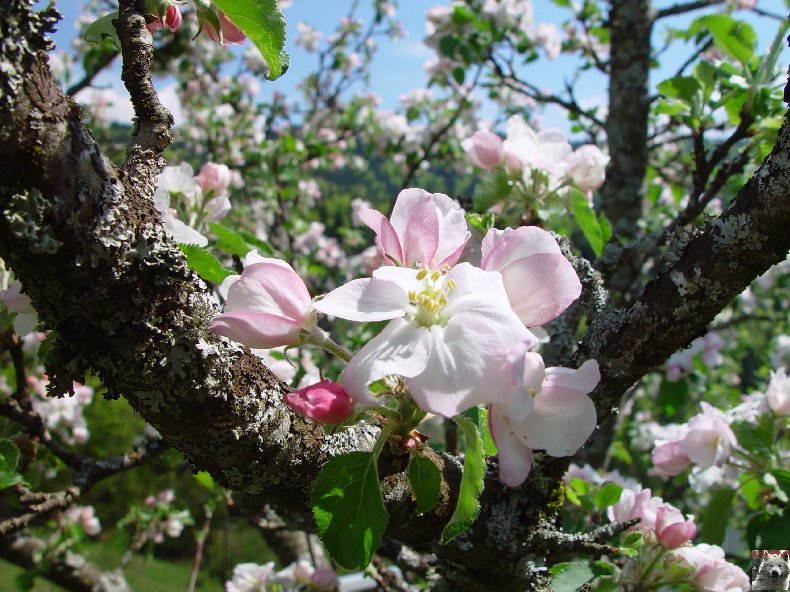 Fleurs de nos champs 0057