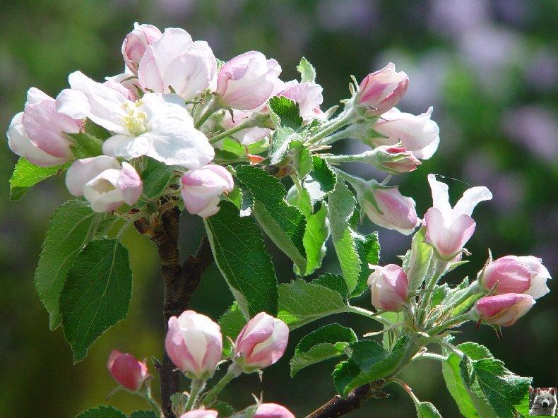 Fleurs de nos champs 0058