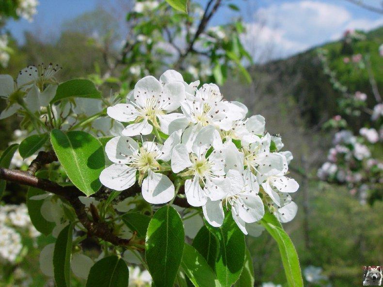 Fleurs de nos champs 0059