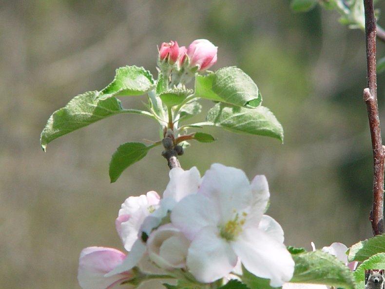 Fleurs de nos champs 0060