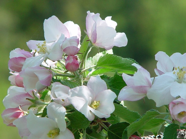 Fleurs de nos champs 0061