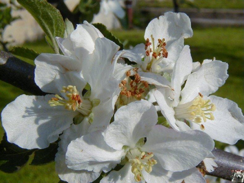 Fleurs de nos champs 0062