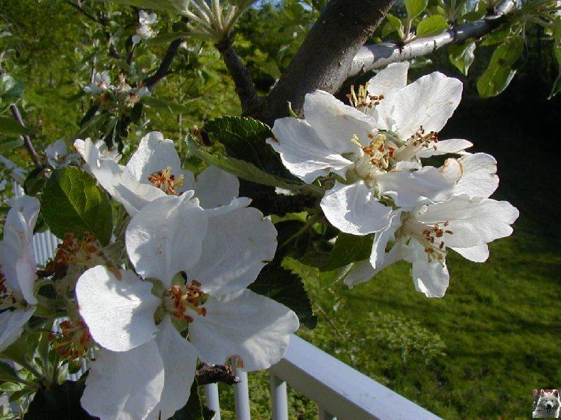 Fleurs de nos champs 0063