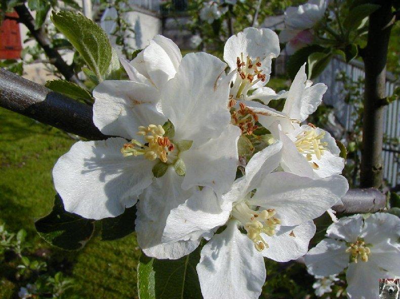 Fleurs de nos champs 0064