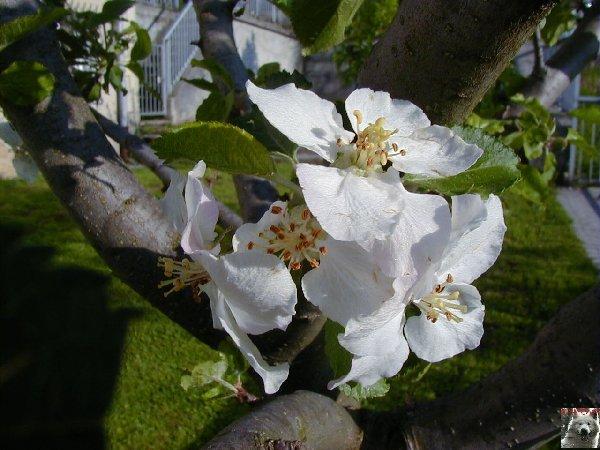 Fleurs de nos champs 0065