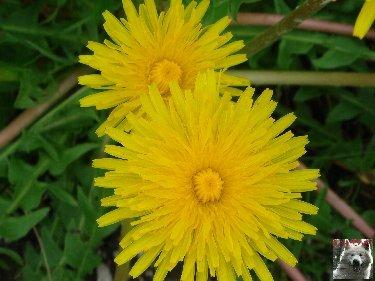 Fleurs de nos champs 0067