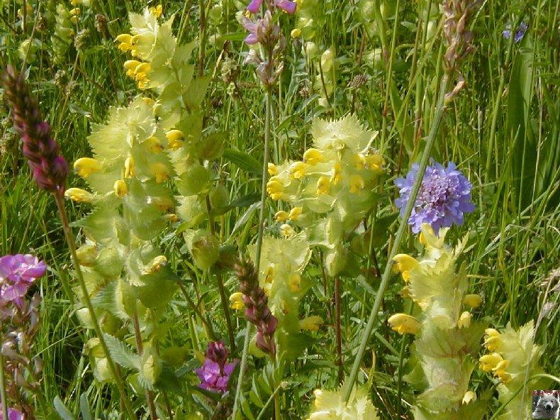 Fleurs de nos champs 0081