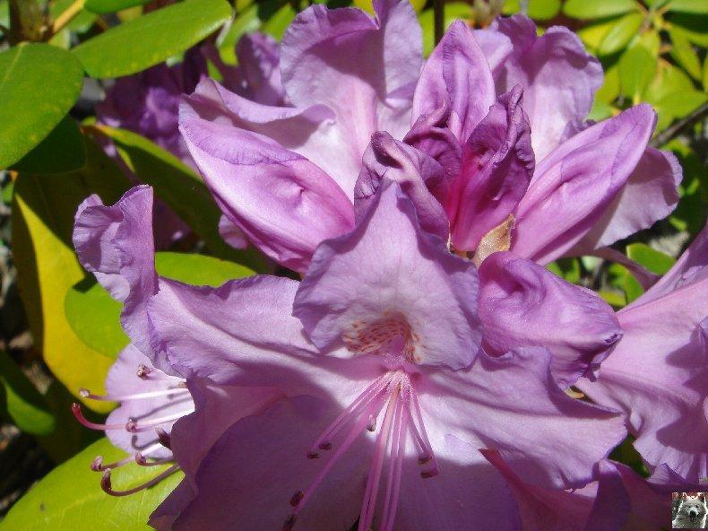 Fleurs de nos champs 0084