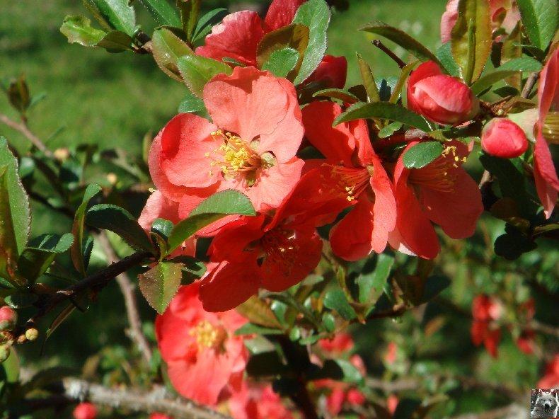 Fleurs de nos champs 0090
