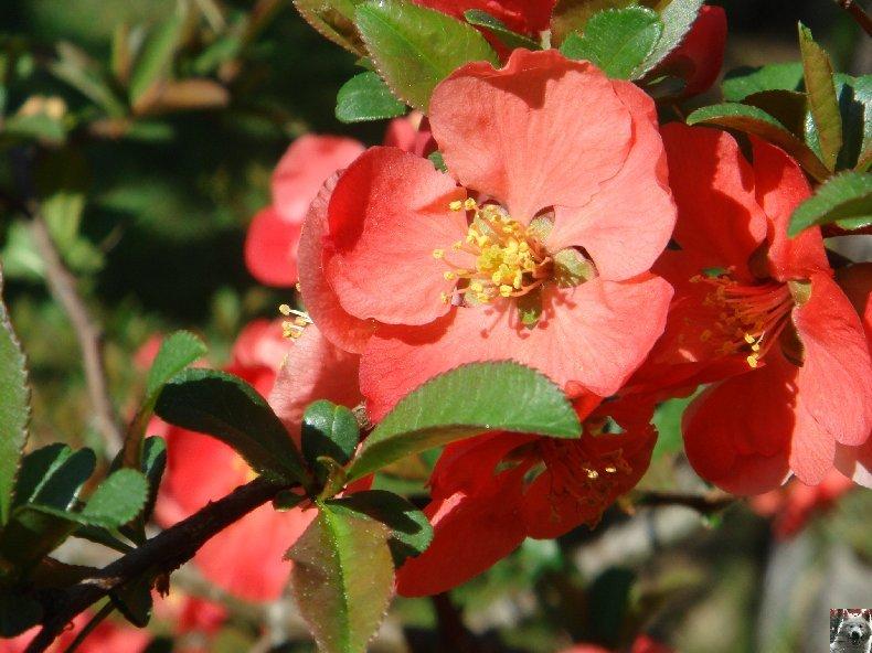 Fleurs de nos champs 0091