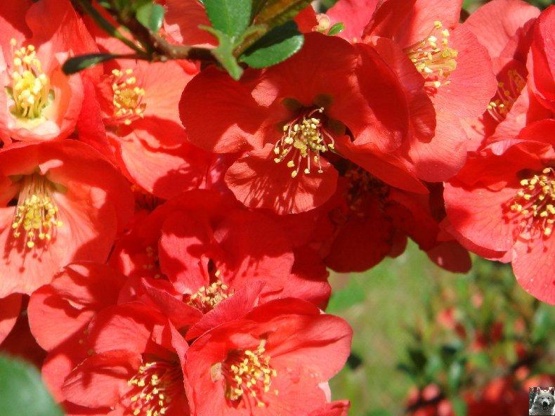 Fleurs de nos champs 0092
