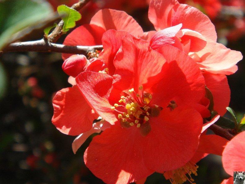 Fleurs de nos champs 0093