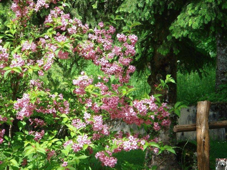 Fleurs de nos champs 0095