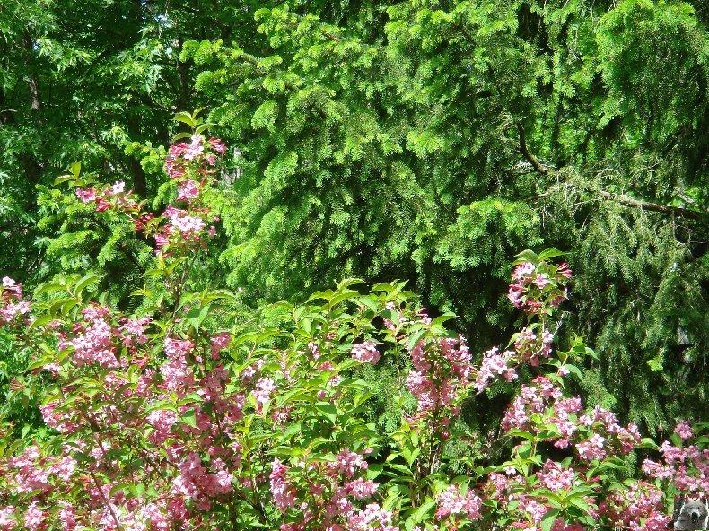 Fleurs de nos champs 0096