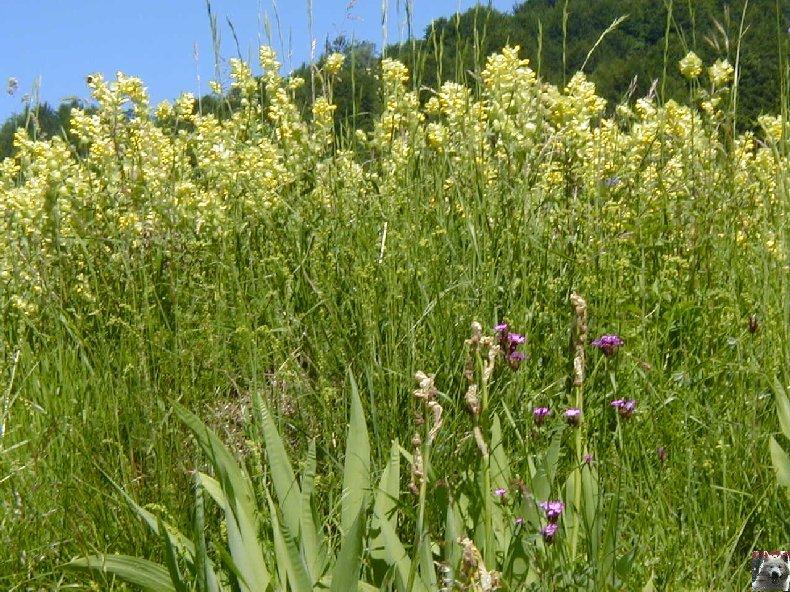 Fleurs de nos champs 0100