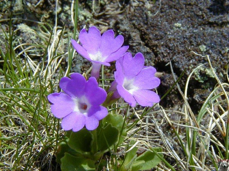 Fleurs de nos champs 0101