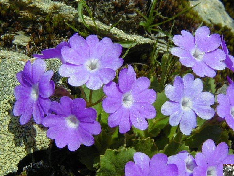 Fleurs de nos champs 0102
