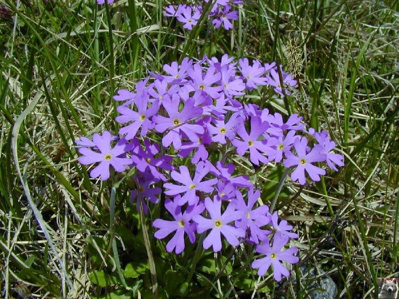 Fleurs de nos champs 0103