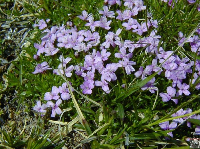 Fleurs de nos champs 0104