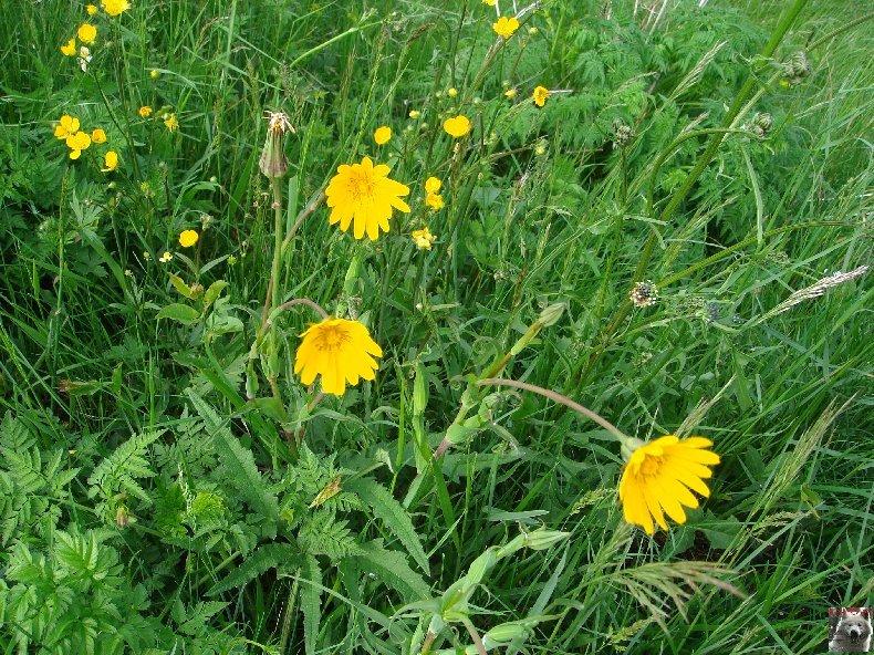 Fleurs de nos champs 0106