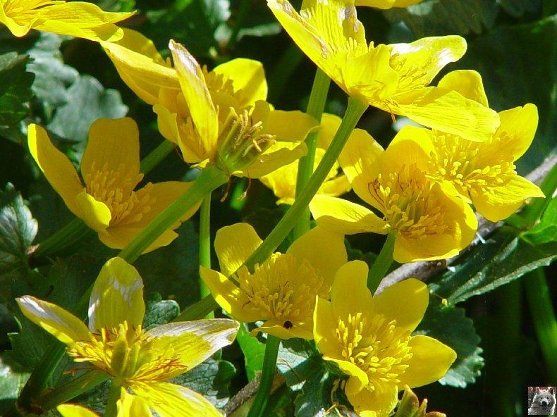 Fleurs de nos champs 0110