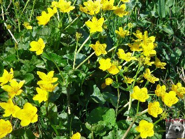 Fleurs de nos champs 0111