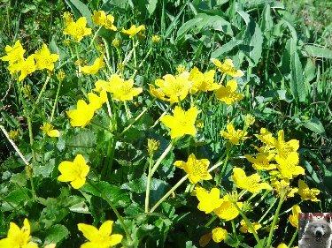 Fleurs de nos champs 0112