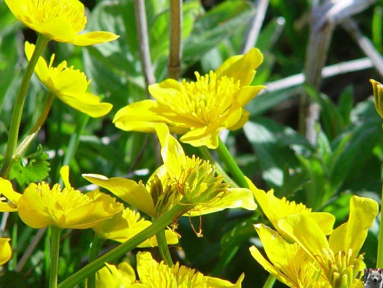 Fleurs de nos champs 0113