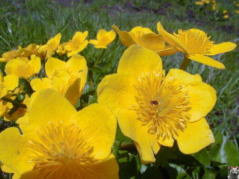 Fleurs de nos champs 0115