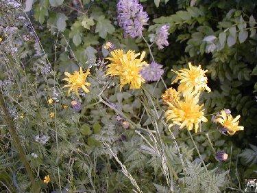Fleurs de nos champs 0122