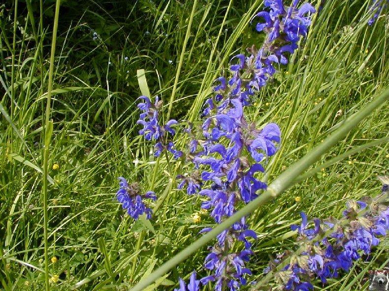 Fleurs de nos champs 0124
