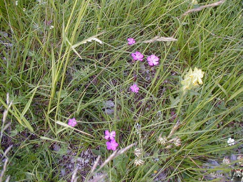 Fleurs de nos champs 0132