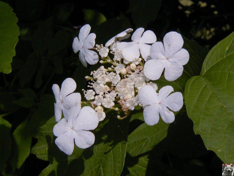 Fleurs de nos champs 0138