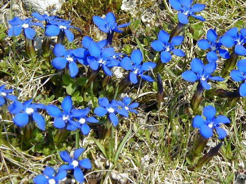 Fleurs de nos champs 0141
