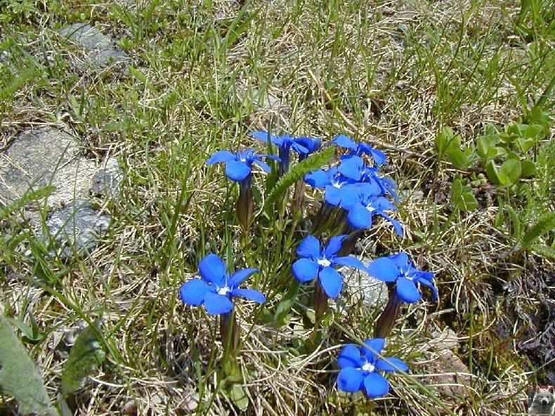 Fleurs de nos champs 0143