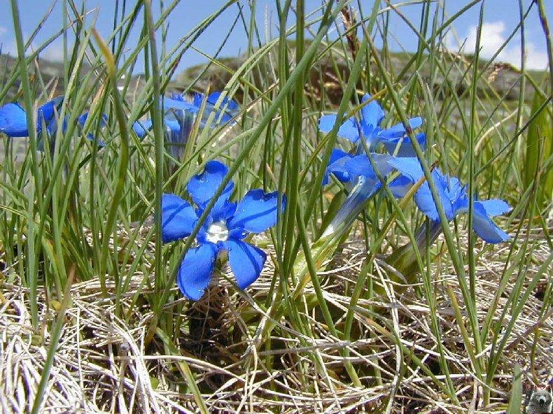 Fleurs de nos champs 0144