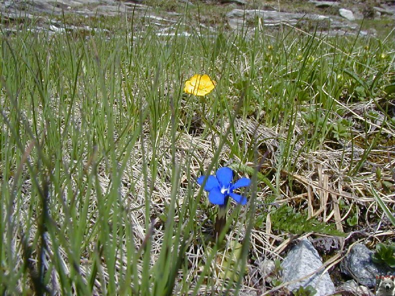 Fleurs de nos champs 0145