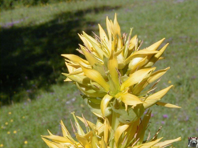 Fleurs de nos champs 0148
