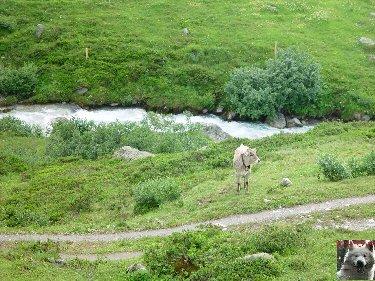 Entre Valais et Uri - La Furkabahn-Bergstrecke  0034