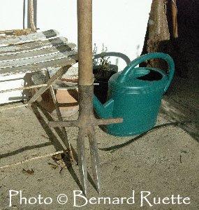 La Gentiane - Fleurs, Racines et Distillation - (25) Fourche