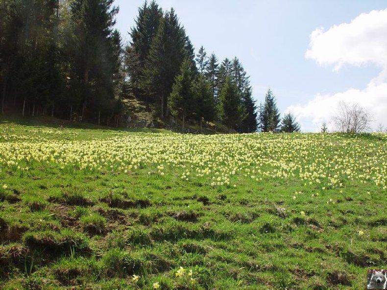 Le Pays de l'Or Jaune - La Pesse (39) 0013