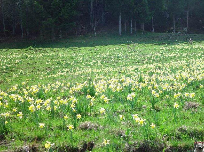 Le Pays de l'Or Jaune - La Pesse (39) 0029