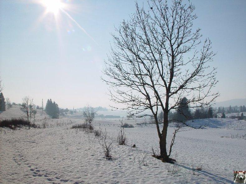 Le Lac de l'Abbaye en Grandvaux (39) 0002