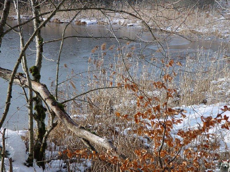 Le Lac de Bonlieu (39) 0002