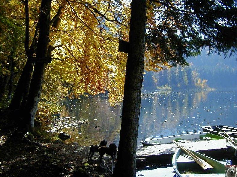 Le Lac de Bonlieu (39) 0009