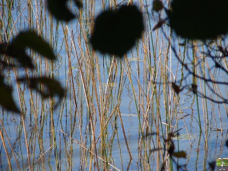 Le lac d'Etival (39) 0008a