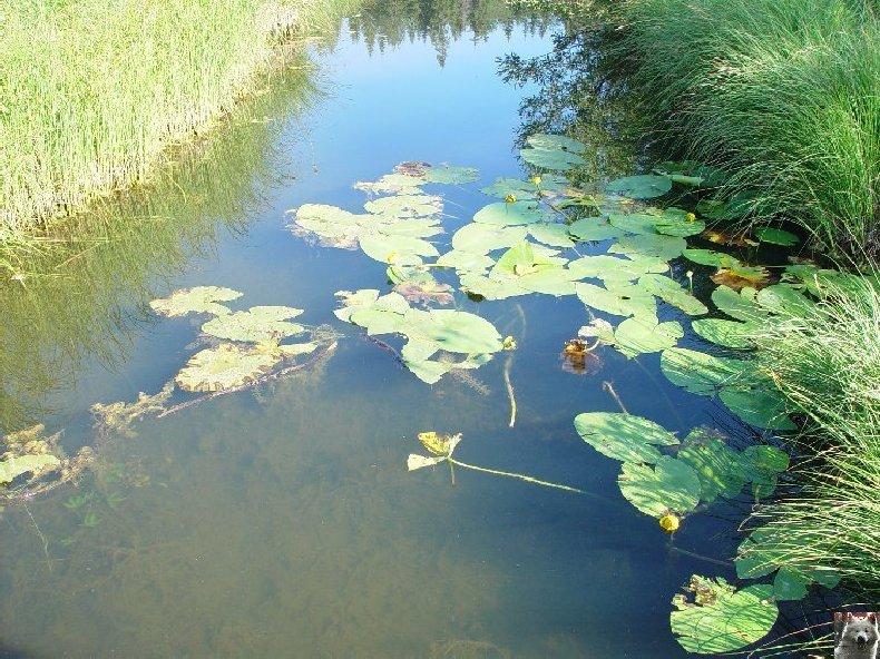 Le lac de Lamoura (39) 0015