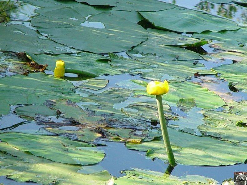 Le lac de Lamoura (39) 0016