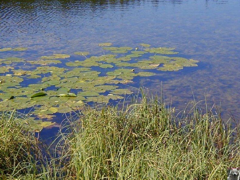 Le lac de Lamoura (39) 0018